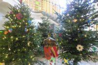 Weihnachtsglanz im Tannenwald