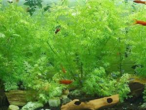 Aquarium-AG